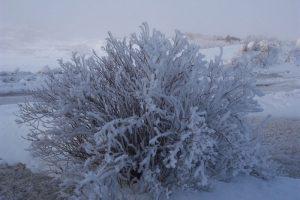 Winter Photos - Bay de Verde